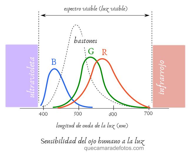 Ojo: respuesta de cada célula fotosensible a la luz